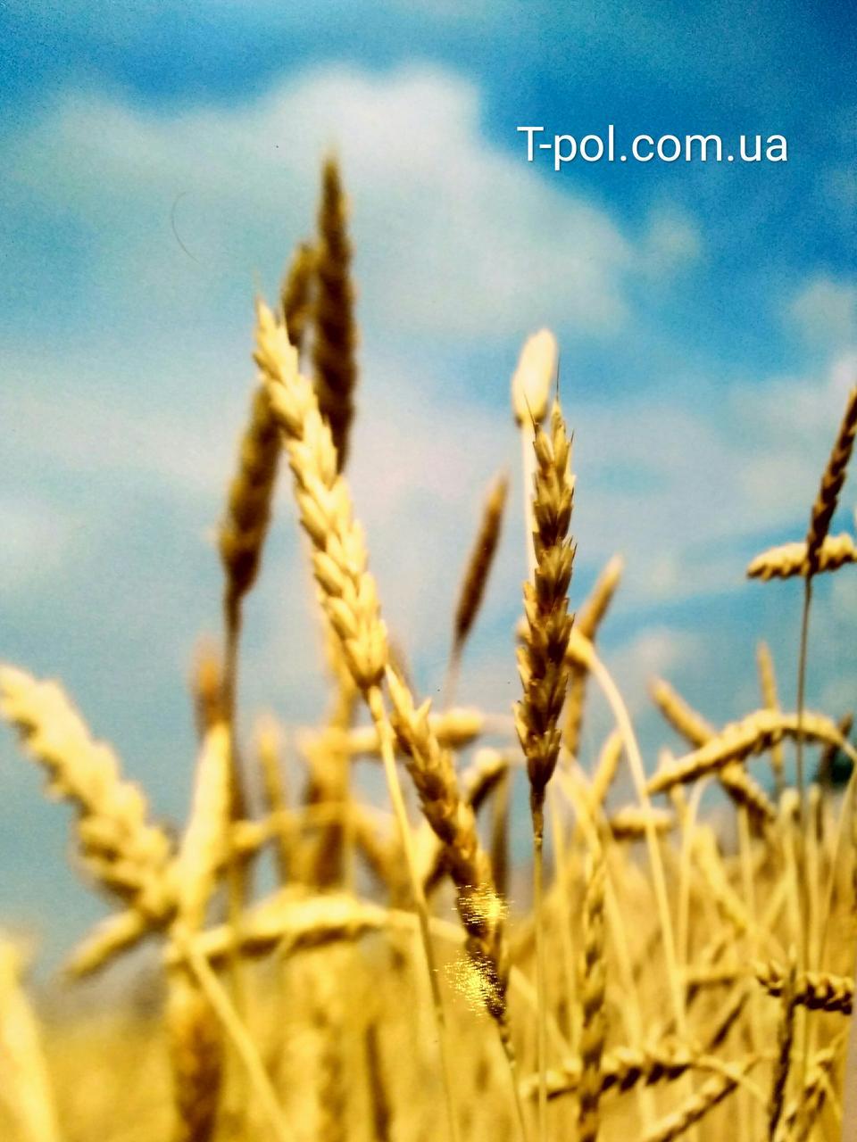 Карбоновый настенный обогреватель Пшеница