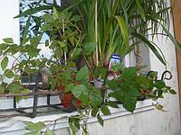 Балконный ящик кованый