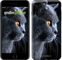 """Чехол на iPhone 7 Plus Красивый кот """"3038c-337-15626"""""""