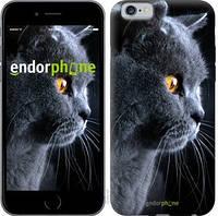 """Чехол на iPhone 6 Красивый кот """"3038c-45-15626"""""""