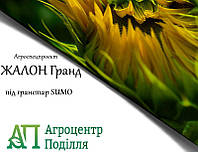 Семена подсолнечника под гранстар Жалон Гранд 108 дн. (новинка 2018 г.!)