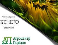Посадочные семена подсолнечника БЕНЕТО 102-107 дн. Агроспецпроект
