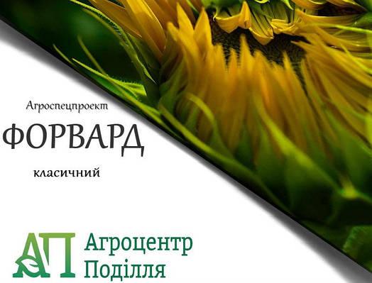 Посадочные семена подсолнечника Форвард  Агроспецпроект