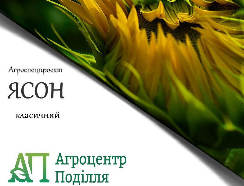 Посадочные семена подсолнечника ЯСОН Агроспецпроект