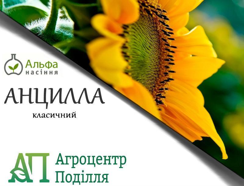 Семена подсолнечника АНЦИЛЛА 106 дн.