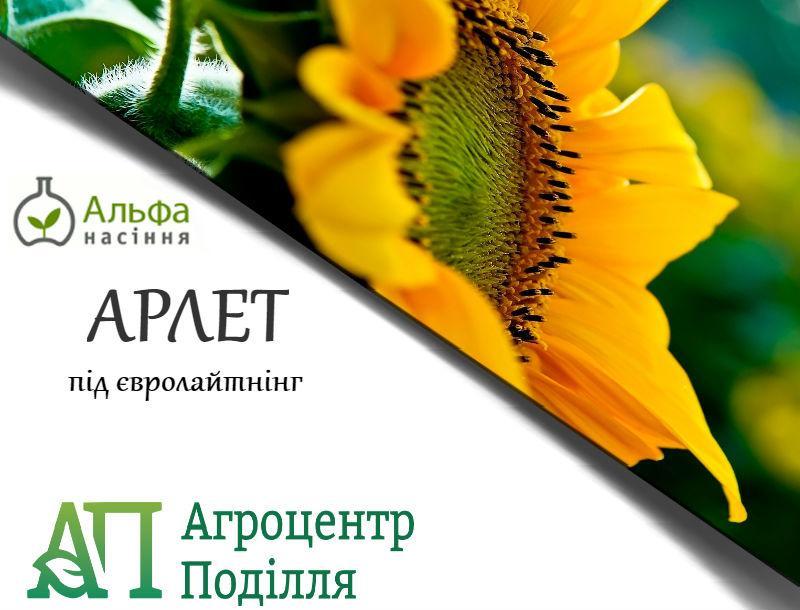 Семена подсолнечника АРЛЕТ под Евро Лайтинг 110 дн.