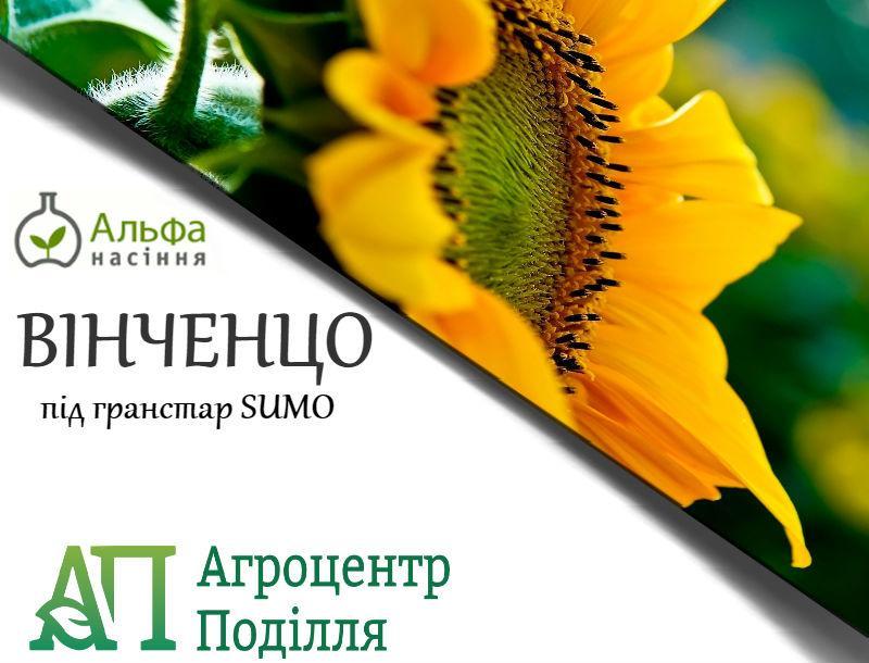 Семена подсолнечника под гранстар ВИНЧЕНЦО (Вінченцо) 108 дн. фр. Стандарт