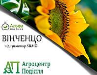 Семена подсолнечника ВИНЧЕНЦО (Вінченцо) под Гранстар 108 дн.