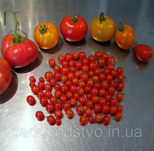 томаты Spoon