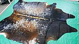 Необычная южноамериканская шкура буйвола  в Украине, фото 4