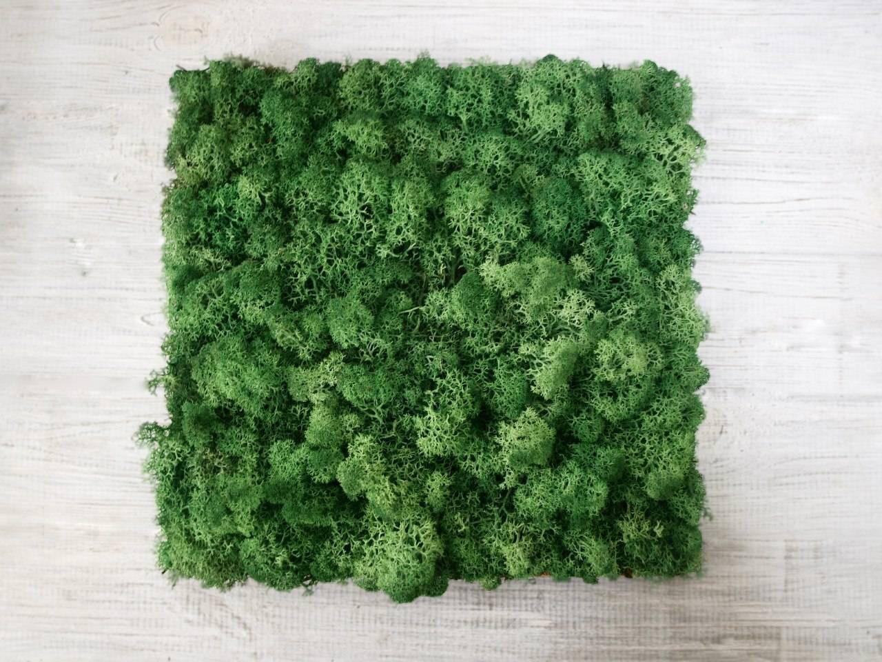 Стабилизированный мох оптом для фитостен  Grass Green Norske Moseprodukter AS