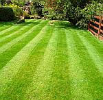 Газонные травы для ухоженного и красивого сада