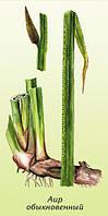 ФИТОСИЛ.Имеет гипохолестеринемические, гепатопротекторные, противовоспалительные, антикоагулянтные свойства