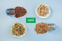 Ячмень, зерно ячменя органическое для проращивания 500 грамм