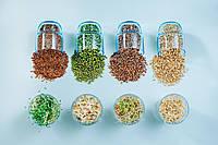 Пшеница, зерно семена пшеницы органической для проращивания 500 грамм