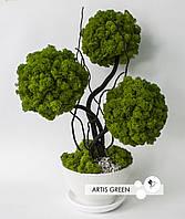 Топиарий, трехствольное эко-дерево из живого светлого мха, T15