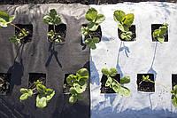 Разная плотность агроволокна — разная защита