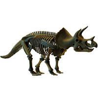 Скелет динозавра - Трицератопс DINO Horizons D502