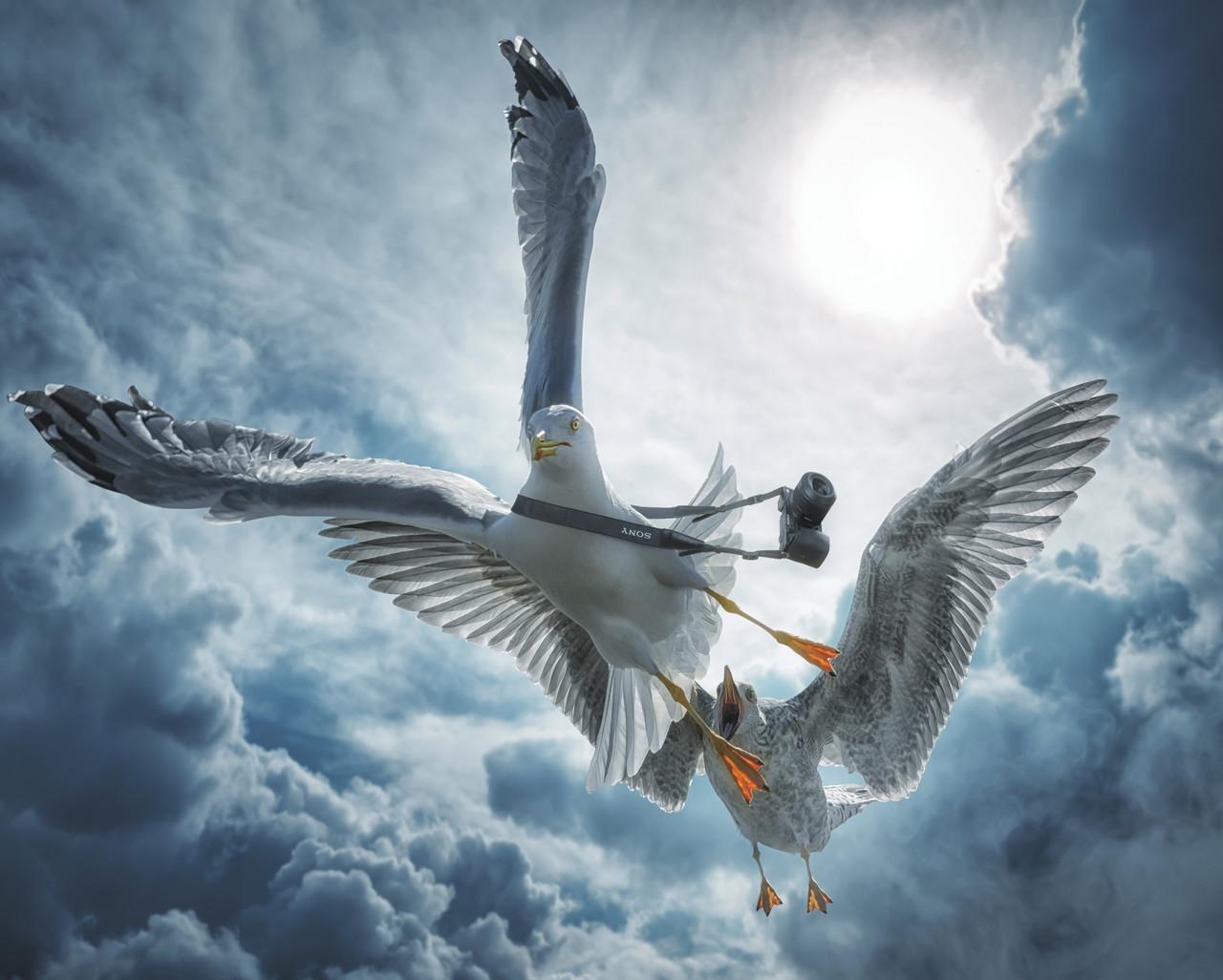 """Картина на стекле """"Альбатрос и чайка"""""""