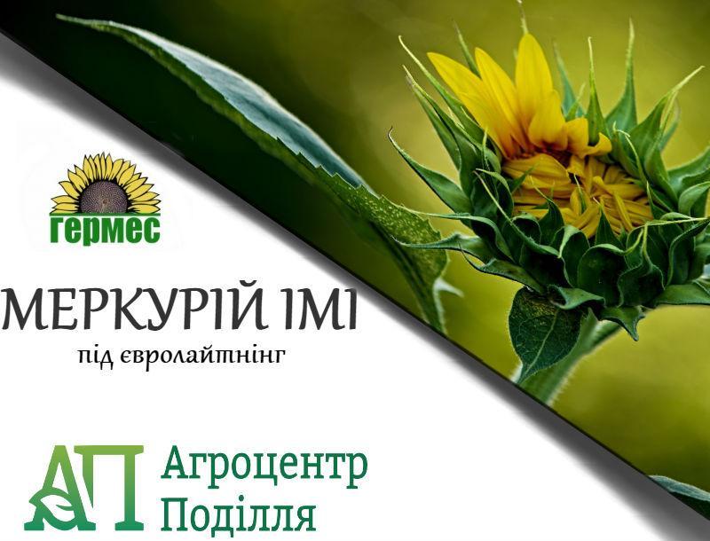Семена подсолнечника под евролайтинг Меркурий ІМІ 108-112 дн. (бесплатная доставка)