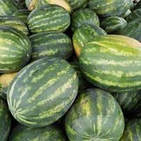 Арбуз Делисия F1 (65-68 дня) плоды 8-10 кг (1000 с.) Lark Seeds