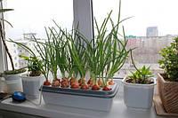 """Прибор для выращивания зеленого лука """"Луковое счастье"""", Садовые принадлежности"""