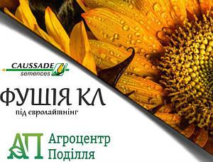 Семена подсолнечника под евролайтинг Фушия КЛ 106-115 дн.