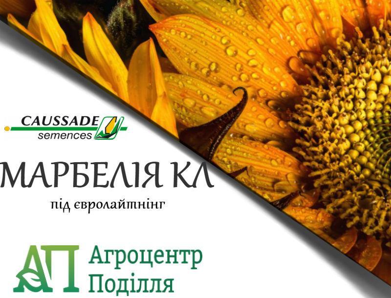 Семена подсолнечника под евролайтинг МАРБЕЛИЯ КЛ 104-108 дн.
