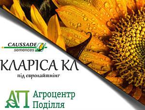 Семена подсолнечника КЛАРИСА  под Евро Лайтинг 104-110 дн.