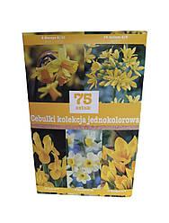 Набор желтых луковичных цветов (75 луковиц)
