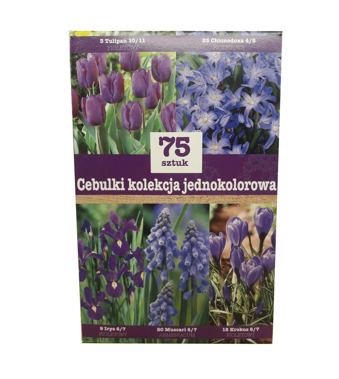 Набор фиолетовых  луковичных цветов (75 луковиц)