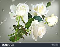 Фотообои  3д  нежные белые розы