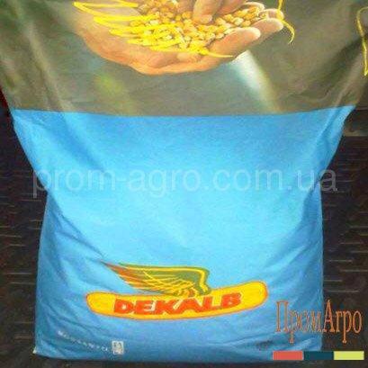 Семена кукурузы Monsanto ДКС 3705 ФАО 300 посевной гибрид кукурудзи Монсанто ДКС 3705, фото 2