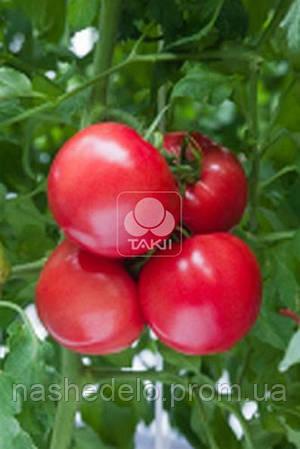 Семена томата ТЕХ 2720 F1 500 семян Takii Seed