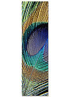 Фотокартина на холсте Перо павлина, 50*180 см