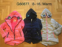 Куртки на синтепоне на девочек оптом, Grace, 8-16 рр