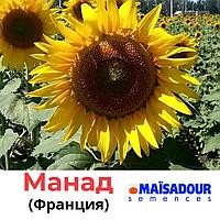 Семена подсолнечника Манад, Маисадур (Maisadour), Франция