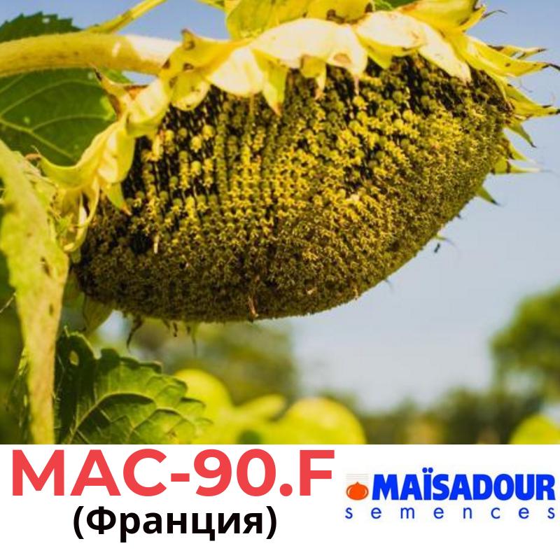 Семена подсолнечника МАС 90 F Маисадур (Maisadour), Франция