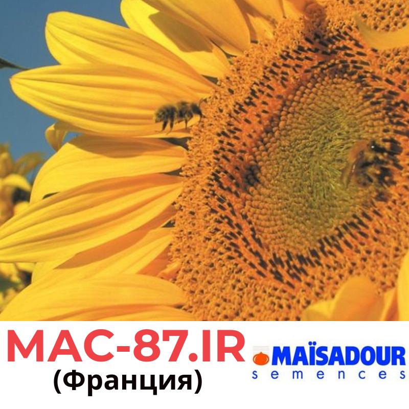Семена подсолнечника Мас 87 ИР (МАС-87 IR) Майсадур (Maisadour), Франция