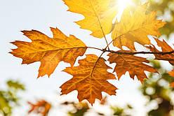 Советы красоты #3. Осеннее обострение