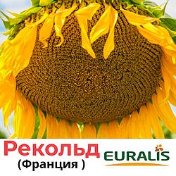 Семена подсолнечника Рекольд от Евралис (Euralis), Франция