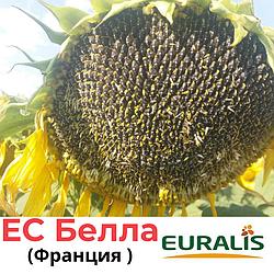 Семена подсолнечника ЕС БЕЛЛА, Евраліс (Euralis), Франция