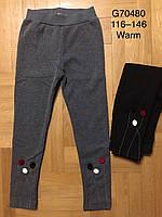 Лосины утепленные для девочек оптом, Grace, 116-146 см,  № G70480, фото 1