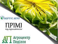 Семена подсолнечника ПРИМИ под Евролайтинг (НЕРТУС)