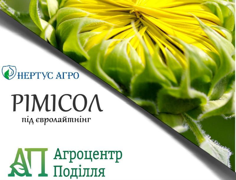 Семена подсолнечника РИМИСОЛ под Евролайтинг (НЕРТУС)