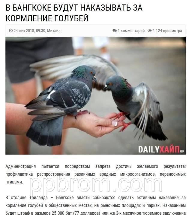 борьба с диким птицами за рубежом