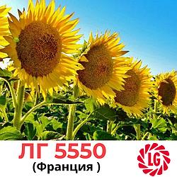Семена подсолнечника ЛГ 5550 (LG 5550) Лимагрейн (Limagrain), Франция
