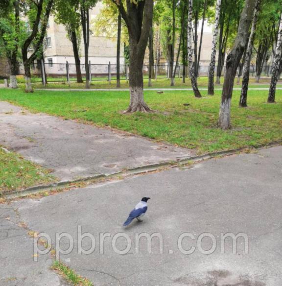 ворона в парке
