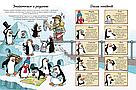Де ховаються пінгвіни? Книга-віммельбух Софі Крейн, Чака Велона, фото 3
