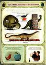 Що роблять динозаври. Розкажу тобі мамо. Вімельбух Еміліі Дзюбак, фото 10